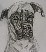 Boxer Dog Drawings Prints - Big Boy Print by Merlene Pozzi