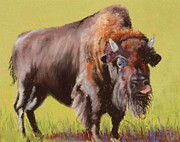 Bison Pastels - Big Boy by Nancy Jolley