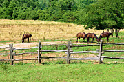 Country Scenes Metal Prints - Big Boys At Pasture Metal Print by Jan Amiss Photography