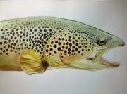 Flyfishing Painting Originals - Big Brown by Peter  Strid