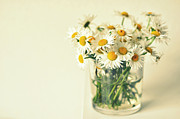 Flowers On White Background Prints - Big Bunch Of Camomile Flowers Print by Photo by Ira Heuvelman-Dobrolyubova