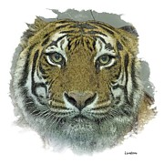 Asian Tiger Digital Art - Big Cat by Larry Linton