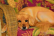 Dogs Digital Art Originals - Big Eyes by Wide Awake  Arts