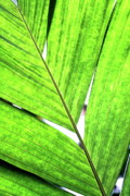 Tropical Plant Posters - Big Green Leaf . 7D5763 Poster by Wingsdomain Art and Photography