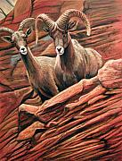 West Pastels Posters - Big Horn Sheep Poster by Deb LaFogg-Docherty