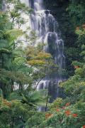 Hamakua Framed Prints - Big Island Waterfall Framed Print by Ron Dahlquist - Printscapes