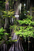 Big Cypress Bayou Photos - Big Jims Bayou by Lana Trussell