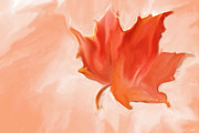 Heidi Painting Posters - Big Leaf Maple Poster by Heidi Smith
