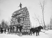 Natural Resources Prints - Big Load Of Logs On A Horse Drawn Sled Print by Everett
