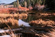 Big Meadow Creek Fall Print by Larry Darnell