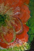 Side View Mixed Media Posters - Big Orange Flower  Poster by Anne-Elizabeth Whiteway