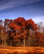 Fall Colors Photos - Big Red by Thomas Young