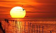 Flock Of Bird Art - Big Sunset by Photo By Prasit Chansareekorn