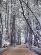 Infrared Art - Big Sur State Park by Jane Linders
