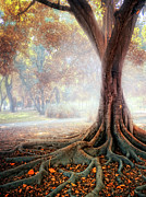 Autumn Scene Photos - Big Tree Root by Zu Sanchez Photography