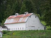 Big White Old Barn With Rusty Roof  Washington State Print by Laurie Kidd