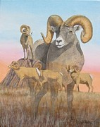 J W Kelly Posters - Bighorn Sheep study 2011 Poster by J W Kelly