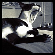 Feline Art - Biiig Yawn!! #kitty #cat #pets #feline by Emily W
