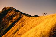 Sports Art Posters - Biker On The Ridge Poster by Dana Edmunds - Printscapes