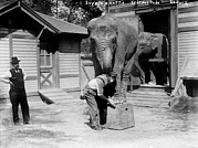 Circus Elephant Posters - Bill Snyder Right, Elephant Trainer Poster by Everett