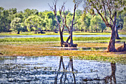 Grass Reflection Framed Prints - Billabong V8 Framed Print by Douglas Barnard