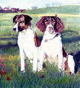 Spaniels Drawings Framed Prints - Billy and Charlie Framed Print by Jenny S Baez Barrueto