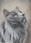 Cat Portraits Pastels Prints - Billy Print by Elizabeth  Ellis