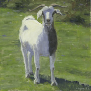 Barnyard Animal Paintings - Billy Goat by John  Reynolds
