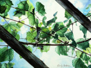Blue Grapes Posters - Biltmore Grapevines Overhead Poster by Carolyn Coffey Wallace