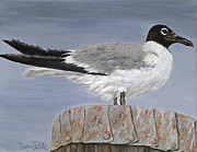 Perry Painting Originals - Bimini Gull by Danielle  Perry