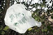 Carrier Photos - Biodegradable Carrier Bag by Victor De Schwanberg