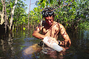 Mangrove Forest Photo Prints - Biological Field Research Print by Alexis Rosenfeld