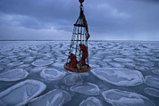 Ice Floes Art - Biologists Search For Ice Stained Brown by Maria Stenzel