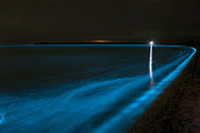 Luminescence Posters - Bioluminescence In Waves Poster by Philip Hart