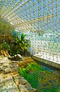 Gregory Dyer - Biosphere2 - Environment 2