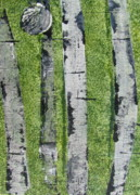Silver Moonlight Paintings - Birch - Green 4 by Jacqueline Athmann