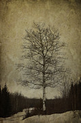 Rural Decay Art - Birch by Larysa Luciw