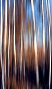 Margaret Hormann Bfa Metal Prints - Birch Metal Print by Margaret Hormann Bfa