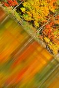 Fall Scenes Photos - Birch Reflection by Emily Stauring