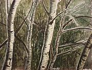 Rosanna Hardin - Birch Tree