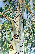 Birch Tree Paintings - Birch Tree Sketchbook Project Down My Street by Irina Sztukowski