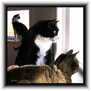 Felines Dale Ford Prints - Bird Alert Print by Dale   Ford