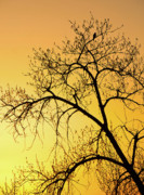 Bird In Tree Posters - Bird at Sunset Poster by James Steele