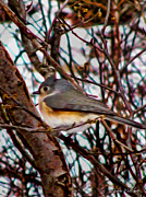 Bird On Tree Prints - Bird Capture In Hdr Print by Debra     Vatalaro