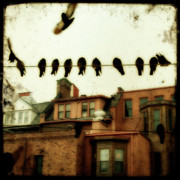 Ttv Posters - Bird Cityscape Poster by Gothicolors With Crows