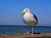 Jennifer Lamanca Kaufman - Bird Close Up