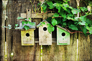 Vine Leaves Framed Prints - Bird Condos Framed Print by Darren Fisher