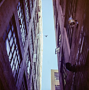Close To People Framed Prints - Bird Flying Above The Buildings Framed Print by Tuan Tran