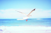 Flying Wild Bird Prints - Bird Flying In Beach Print by Photo by Glenn Waters in Japan