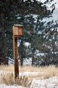Amee Stadler - Bird Home
